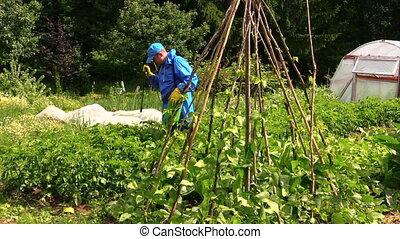 man spray potato plants - Peasant farmer man in protective...