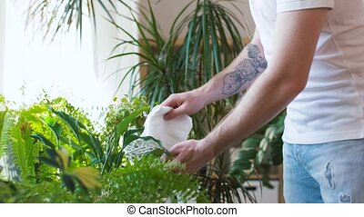 man spraying and cleaning houseplants at home - people,...