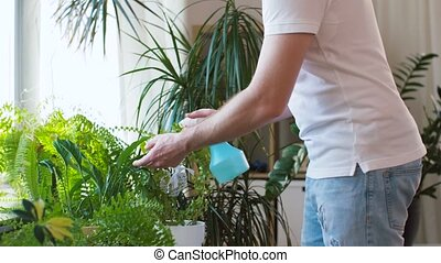 man spraying houseplants with water at home - people, nature...