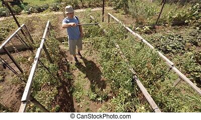 Man Sprays Tomato Vines in Garden with Pesticide