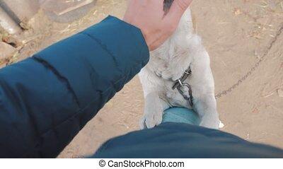 man, stroking, de, dog, hoofd, dichtbegroeid boven, first-person, aanzicht, ., man, is, stroking, de, dog., vriendschap, tussen, dog, en, man, love., aanhalen, dog, en, levensstijl, man, concept