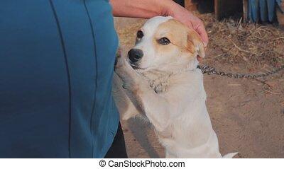 man, stroking, de, dog, hoofd, dichtbegroeid boven, first-person, aanzicht, ., man, is, stroking, de, dog., vriendschap, tussen, dog, en, man, levensstijl, love., aanhalen, dog, en, man, concept