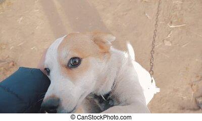 man, stroking, de, dog, hoofd, dichtbegroeid boven, first-person, aanzicht, ., man, is, stroking, de, dog., vriendschap, tussen, dog, en, man, love., aanhalen, dog, levensstijl, en, man, concept