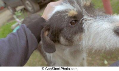 man, stroking, een, dog, closeup, van, slowmotion, video