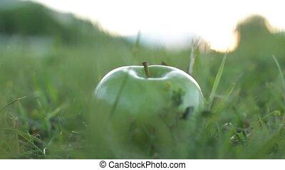 man take fallen apple
