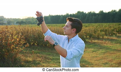 Man testing ripening of grapes. Side view of young man in shirt holding bunch of grapes and exploring its quality in nature