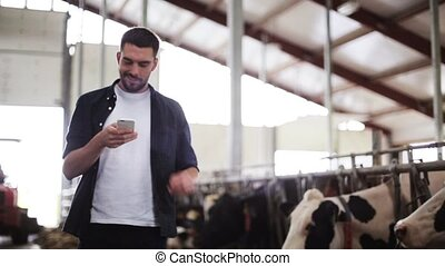 man texting on smartphone and cows at dairy farm -...