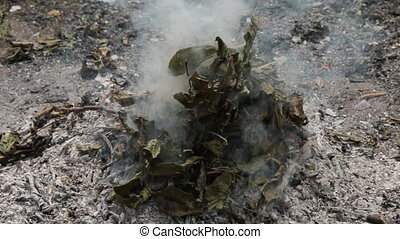 Man throws the dry leaves into the fire and it lights up. leaves, grass and other natural vegetation with thick white smoke.