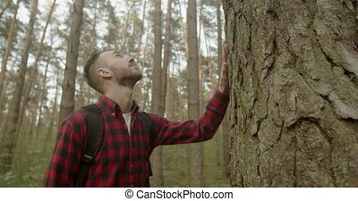 Man Touches Pine Tree - Young bearded backpacked man dressed...