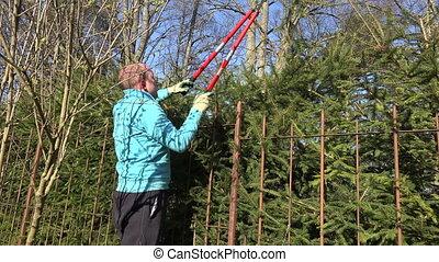 man trim hedge clippers - Gardener man in blue jumper prune...