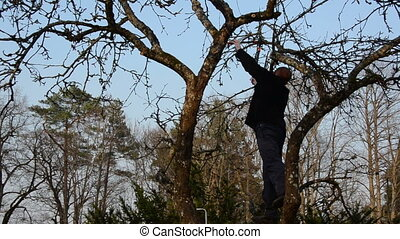 man trim tree branch - panorama view of gardener on apple...
