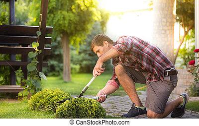 Man trimming bush in backyard