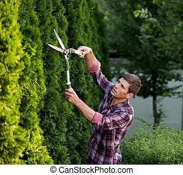 Man trimming bushes in garden