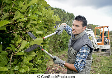 Man trimming hedge with secateurs