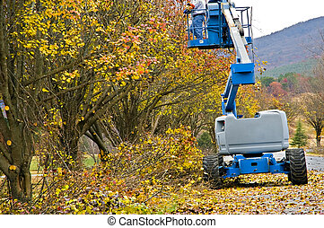 Man Trimming Trees - Man in a lift trimming trees along a...