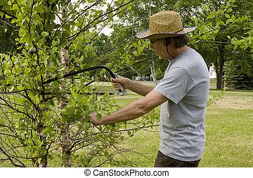 man trimming trees