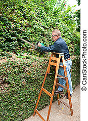 Man trimming vines - A man conducting his chores by trimming...