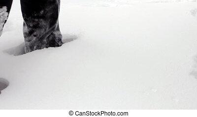 Man wades knee-deep through snow
