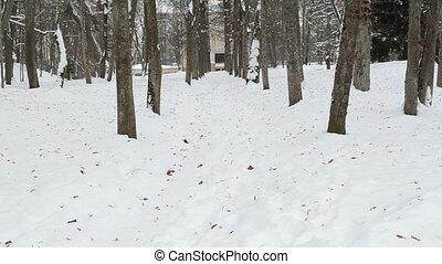 man walk path snow winter