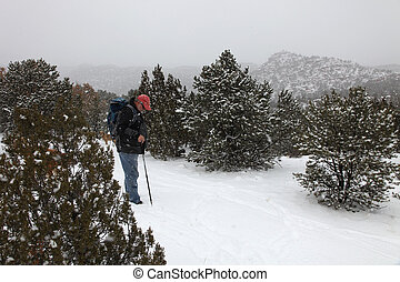 Man Walking Dogs in Snowstorm