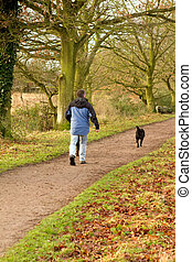 man walking dogs in the countryside