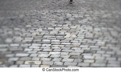 Man walking on a stone slab. UHD video