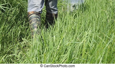 Man walks along the thick grass in khaki boots of protective...