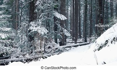 Man Walks On Path Through Woods In Snowfall