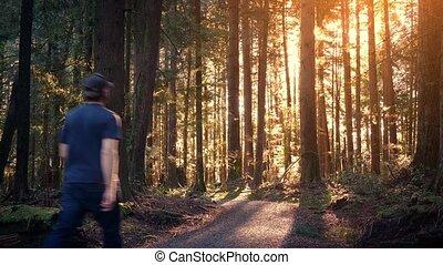 Man Walks Through Peaceful Forest At Sunset