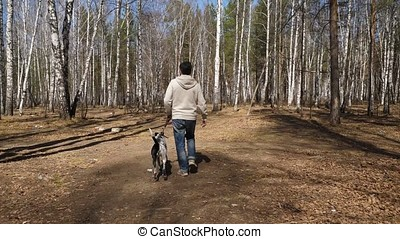 Man walks with dog in autumn park at sunny day. Man walking with a Dalmatian dog, view from the back