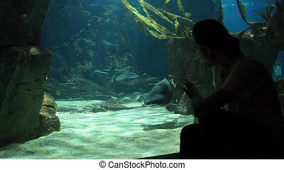 aquarium - man watch beautiful aquarium