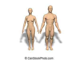 Man and woman backs - isolated  Back, backbone, beauty