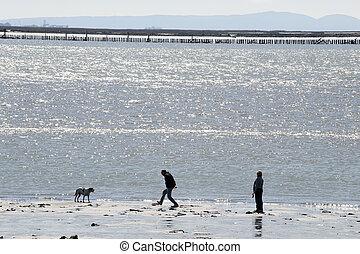 Man with a dog on the beach