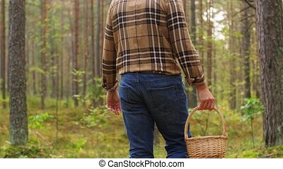 man with basket picking mushrooms in forest - picking season...