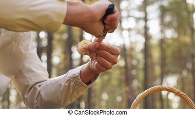 man with basket picking mushrooms in forest - season and ...