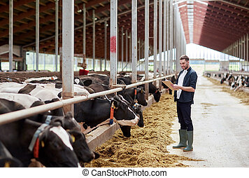 man with clipboard and cows at dairy farm cowshed -...