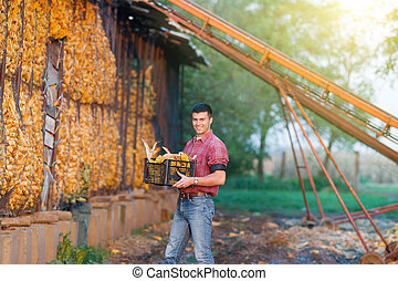 Man with corn cobs in crates