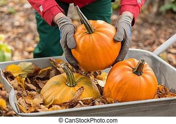 Man with gloves holding a pumpkin