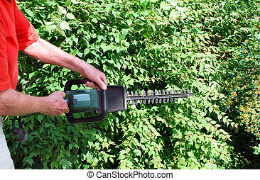 man with hedge trimmer in summer and green bushes