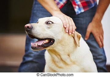 Man with his dog - Man with his yellow labrador retriever