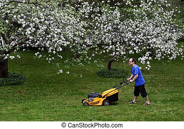 man with lawn mower in garden, blooming apple trees