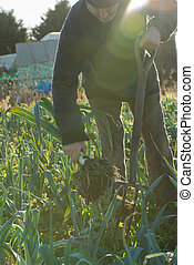Man with Pitchfork Pulling Leek from the Ground Lens Flare