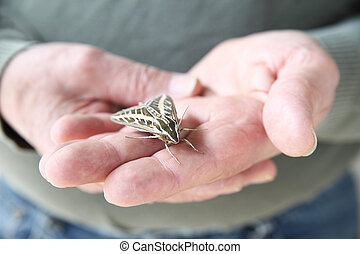 man with sphinx moth on hand