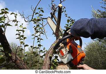 man without the necessary protection, cuts tree with ...