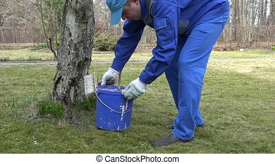 man worker paint tree with brush in early spring in orchard....