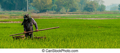 Man working in a green rice field