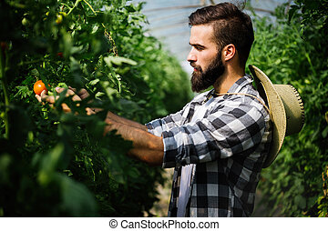 Man working in a greenhouse.