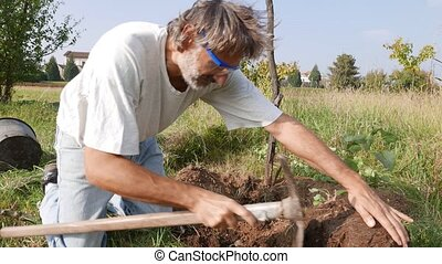 man working in the garden - planting a new apple tree