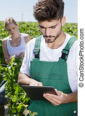 man working in vineyard with tablet