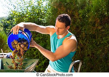 Man working with grape harvesting machine